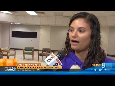 CBS 8 Highlights Paws for Purple Hearts