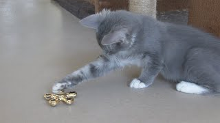 Kitten VS Fidget Spinners