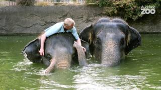 Meet Auckland Zoo's elephant team leader Andrew Coers