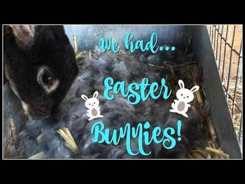 We had... Easter BUNNIES!