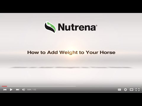 Tips for Putting Weight on Your Horse