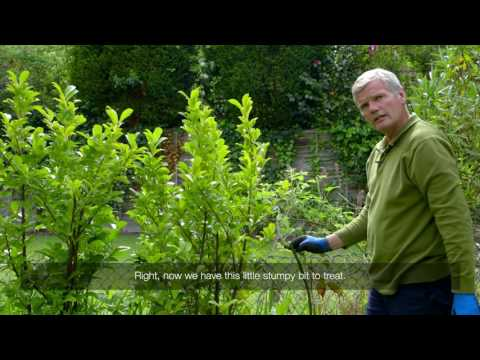 How to treat brambles in your hedge with Roundup weedkiller gel | Video