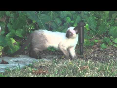 Feral Cat Neutering / Spaying