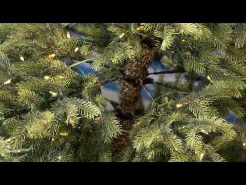 Puleo Windsor Spruce Pre lit