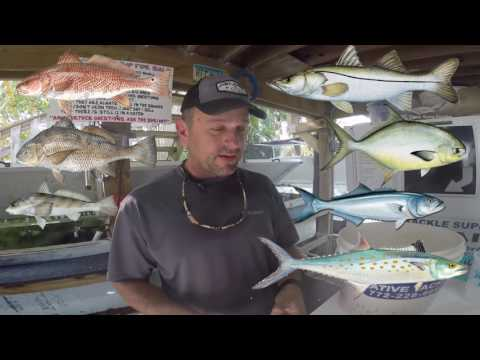 The Best Bait for Beach fishing