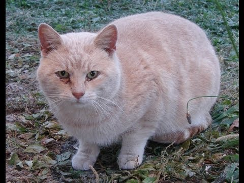 Taming a feral Tom cat 101.1 (Are we