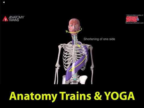 Anatomy Trains YOGA, Easy Pose and more...