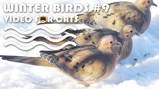 VIDEO FOR CATS TO WATCH: Winter Birds #9. Bird Video for Cats - Mourning Dove.