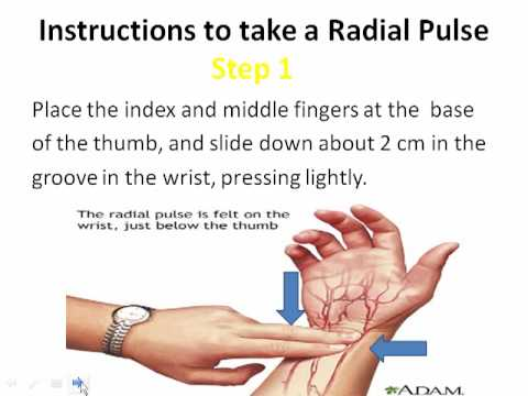 How to take a Radial Pulse