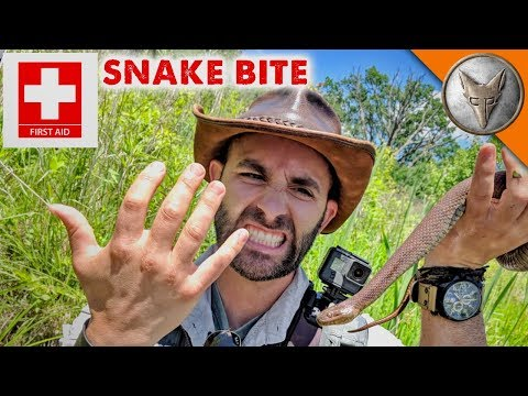 Snake Bite First-Aid