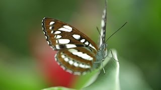 Amazing New Butterfly House Opens At Zsl Whipsnade Zoo
