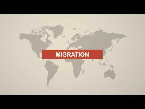 All about Migration in Switzerland   Zurich Hub