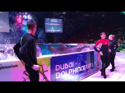 The Best Ever Never Seen Dubai Dolphin Show - 2018