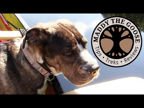 Introducing... Lou! - (1 of 10) 5 Day Solo Canoe Trip with Dog