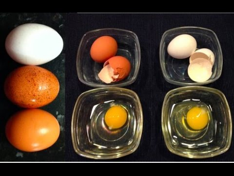 White vs  Brown Which Eggs Better to Buy ? which is More Healthy ?