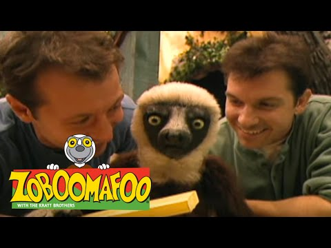 Download Zoboomafoo 126 - Playtime (Full Episode)