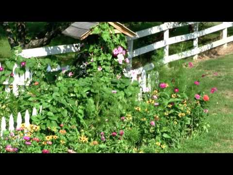 How to - Easily plant flower seed for a beautiful garden