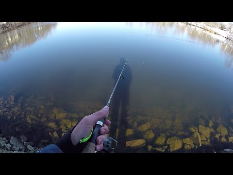 Fishing for a Record Yellow Perch.....................(Fail)