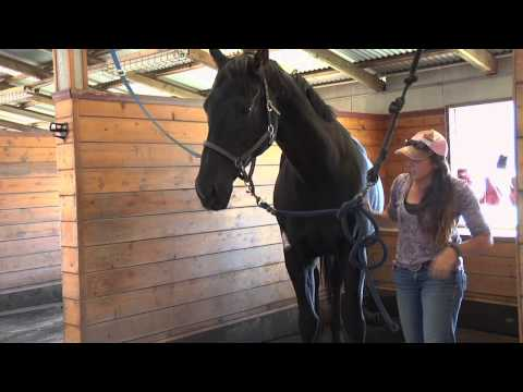 How to re-educate a resistant horse to pick up its feet part one