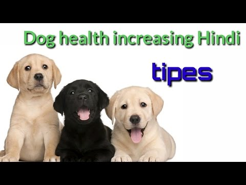 How To increase Your Dogs Health tips in hindi