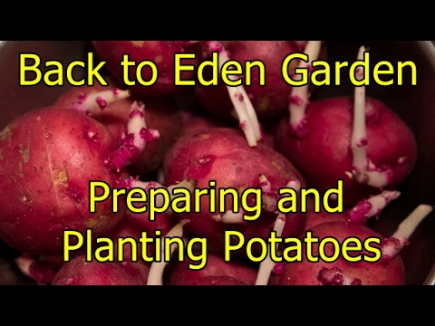 Back to Eden Garden - Preparing and planting potatoes