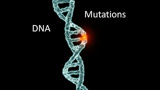 Does the Evidence Support Creationism? (Part 4 of 6: Genetics)
