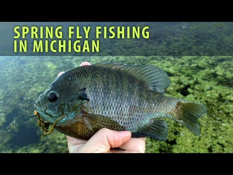 Fly Fishing for Bass, Bluegill, and Crappie in Michigan Spring 2017