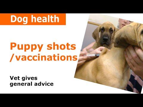Puppy Vaccinations & Shots - Vet Advice