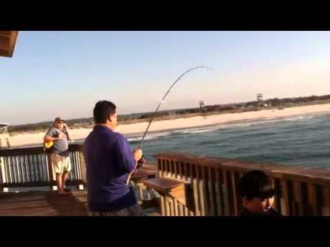Shark attack 2014