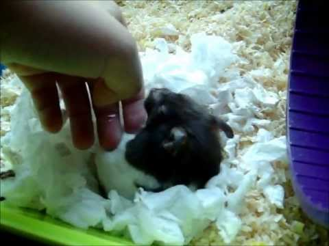 How to keep your hamster warm in winter