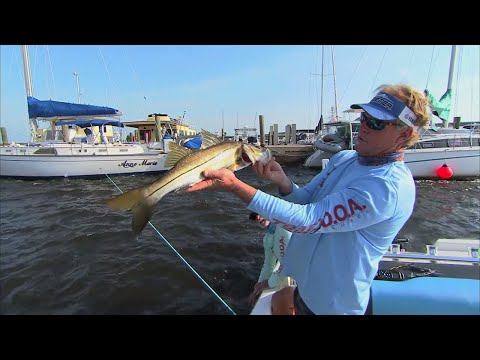DOA Terroreyz Snook Fishing Florida Under Docks in Stuart Florida