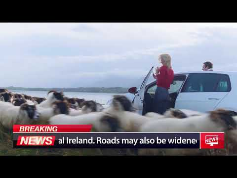 Ireland introduces Sheep Traffic Lights
