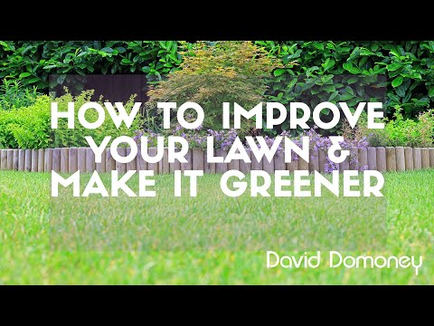 How to improve your garden lawn and make the grass greener