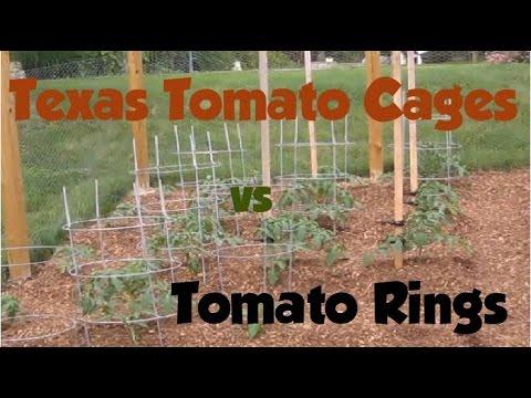 Texas Tomato Cages vs Tomato Rings