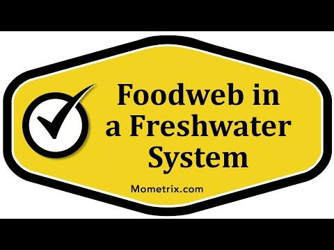 Foodweb in a Freshwater System