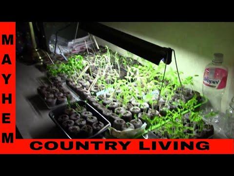 New seed starter grow light