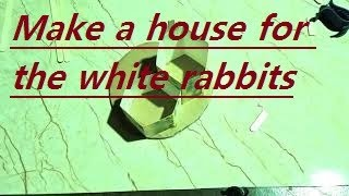 Make a house for the white rabbits