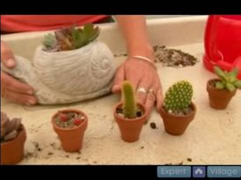 How To Grow Cactus And Succulent Plants : Light Requirements for Cactus and Succulent Plants