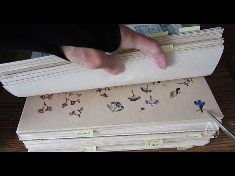 Peeking at Pressed Flowers for Crafts and Arrangements - Part 1