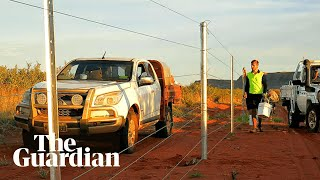 Building the world's largest cat-proof fence