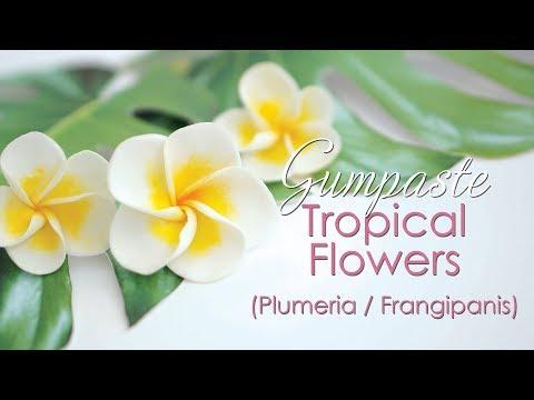 Gumpaste Plumeria / Frangipanis Tropical Flower Tutorial