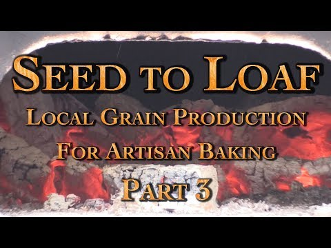 Seed to Loaf Local Grain Production For Artisan Baking Part 3