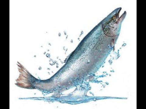 How Do You Know if You Are Eating Wild Atlantic Salmon?