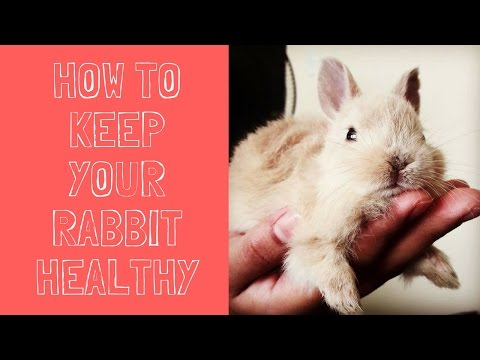 How to Keep Your Rabbit Healthy