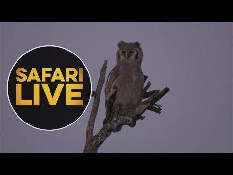 safariLIVEs: Episode 8