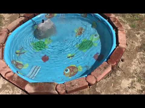 Xxx Mp4 I'm Building The Most INSANE Backyard Kiddie Pool Pond On Youtube 3gp Sex