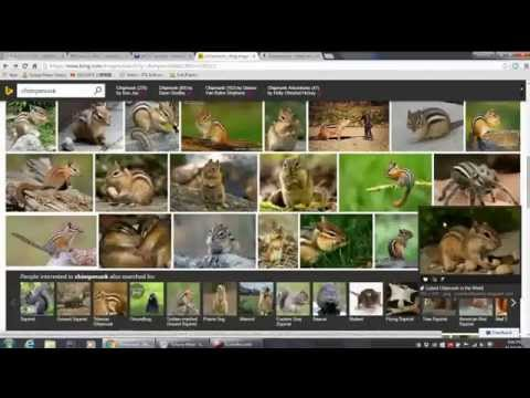 How to get rid of chipmunks in my yard? - part 1 of 3