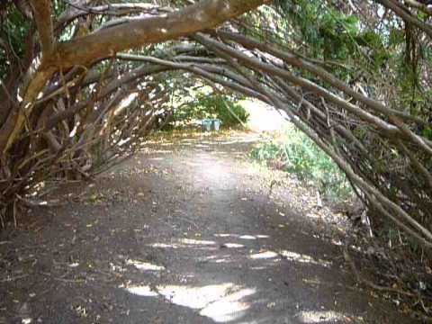 Under an arch of branches