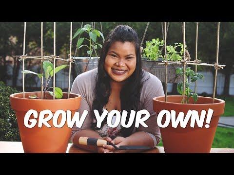 DIY Vegetable Container Garden