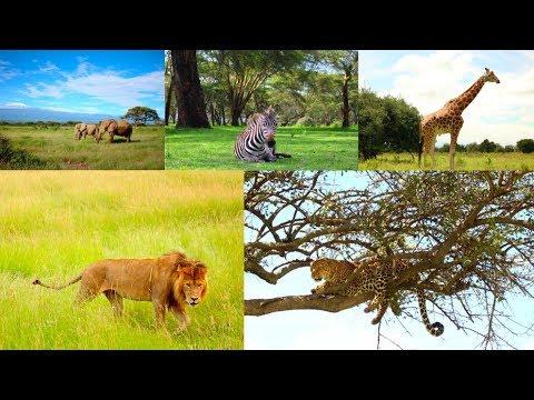 African Safari - Epic Kenya Safari!